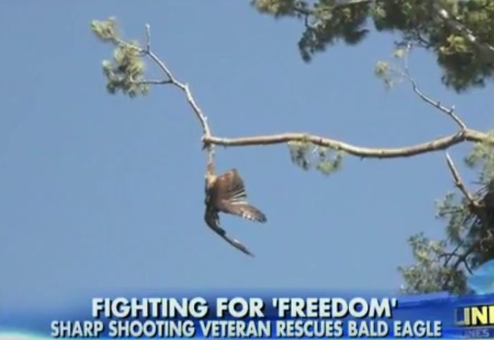 Sharp-Shooting Vet Rescues Bald Eagle