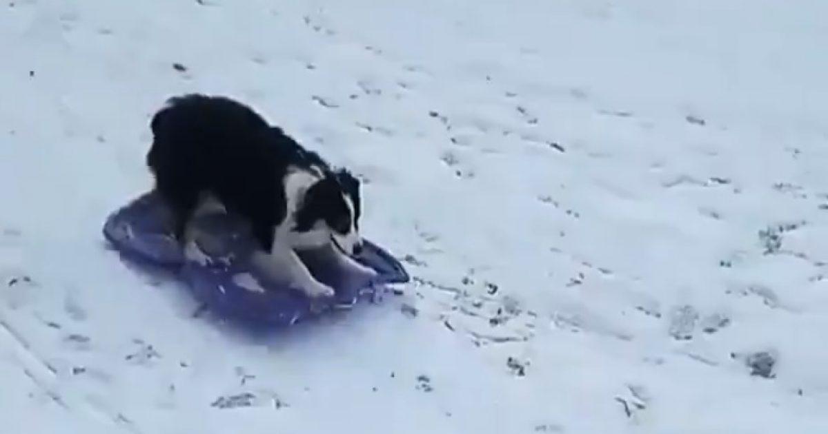 Dog Sled Delight